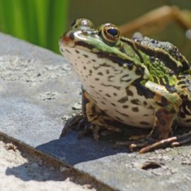 Authentic Success: Some People Eat Frogs (5 of 5)